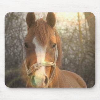 Den kastanjebruna arabiska hästmusen vadderar musmatta