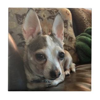 Den keramiska Chihuahuahunden belägger med tegel Kakelplatta