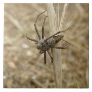Den kusliga Crawly spindeln belägger med tegel Stor Kakelplatta