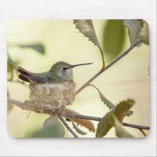Den kvinnliga hummingbirden på henne bygga bo musmatta
