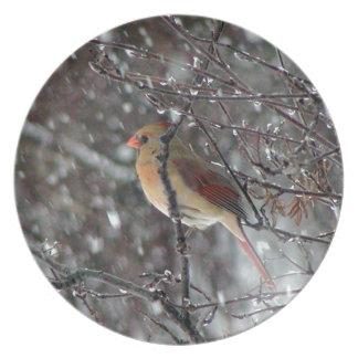 Den kvinnliga kardinalen pläterar tallrik