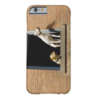 Den låga vinkeln beskådar av hundar i öppet barely there iPhone 6 skal