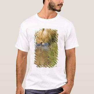 Den lägre Mara, MasaiMara leken reserverar, Kenya, T-shirt