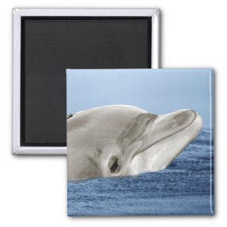 Den le delfinen magnet