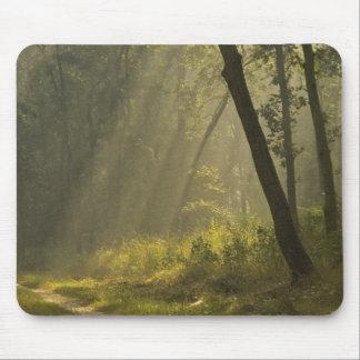 Den ljusa morgonen strålar till och med träd i dju mus mattor