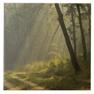 Den ljusa morgonen strålar till och med träd i dju stor kakelplatta