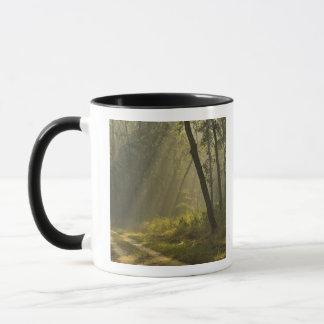 Den ljusa morgonen strålar till och med träd i mugg