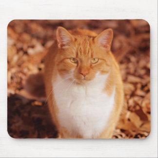 Den ljust rödbrun tabby kattmusen vadderar musmatta