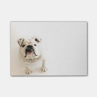 Den lojala vitbulldoggen fotograferar post-it lappar