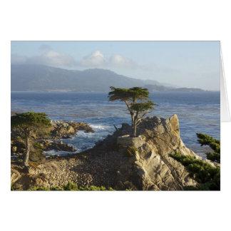 Den Lone Cypressen OBS Kort