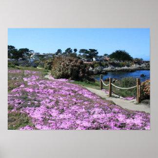 Den Monterey fjärdkusten fodrar, fjädrar vägfotoet Affisch
