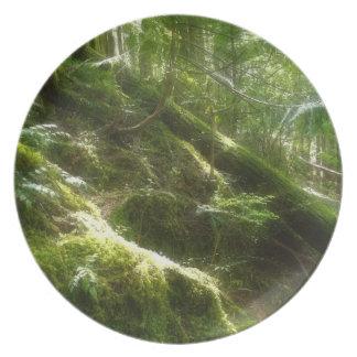 Den Mossy skogen i solljusNatur-älskare pläterar Tallrik