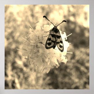 Den nära övre fjärilen på en blomma i sepia tonar poster