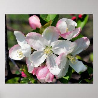 Den nätt vårblomman blomstrar tätt upp poster