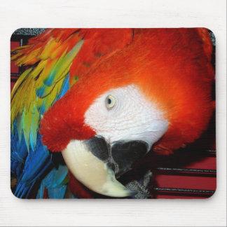 Den nyfikna Macawmusen vadderar Musmatta
