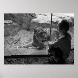 Den nyfikna tigern möter det nyfikna barnet poster