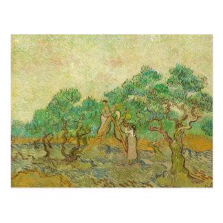 Den olivgröna fruktträdgården vid den Van Gogh Vykort