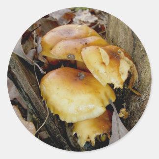 Den orange kolonin plocka svamp klistermärkear runt klistermärke