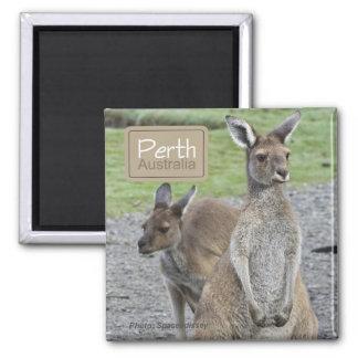 Den Perth Australien kängurun reser kylmagneter Magnet
