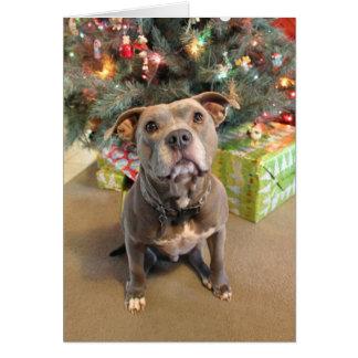 Den Pitbull kärlekjulen förbigår julkortet Hälsningskort