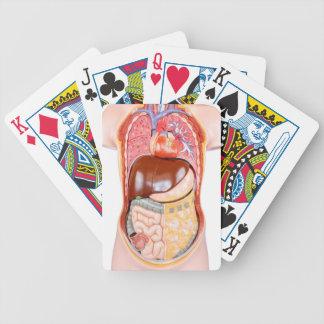 Den plast- människatorsoen modellerar med organ på spelkort