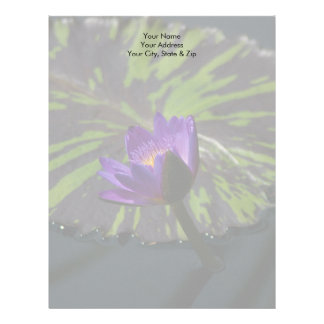 Den purpurfärgade lotusblommanäckrosen och randiga brevhuvud