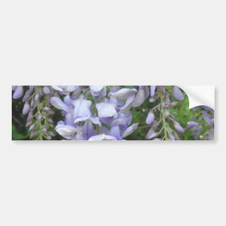 Den purpurfärgade Vinewisteriaen blommar vildblomm Bildekal