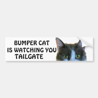 Den rikliga katten håller ögonen på Meme BAKLUCKA Bildekal