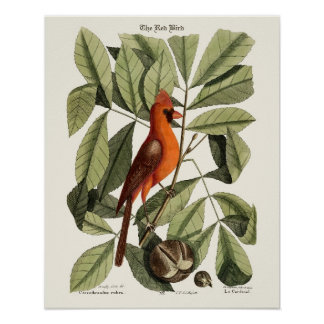 Den röda fågeln - Seligmann Poster