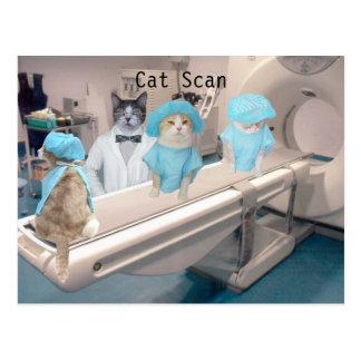 Den roliga kattbildläsningen avbildar vykort
