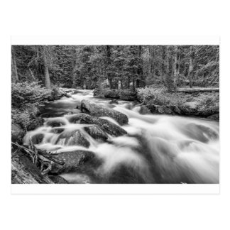 Den Roosevelt nationalskogen strömmer svartvitt Vykort