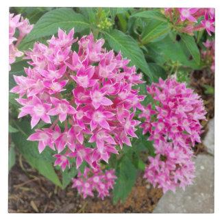 Den rosa blommigten belägger med tegel stor kakelplatta