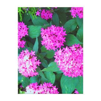 """Den rosa blomsterutställningen Longwood 18"""" x 24"""" Canvastryck"""