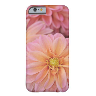 Den rosa dahliaen blommar iphone case barely there iPhone 6 fodral