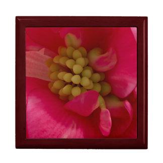 Den rosa gåvan för BegoniaStamenmakroen boxas Minnesask