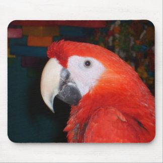 Den scharlakansröda macawen profilerar beskådar musmatta