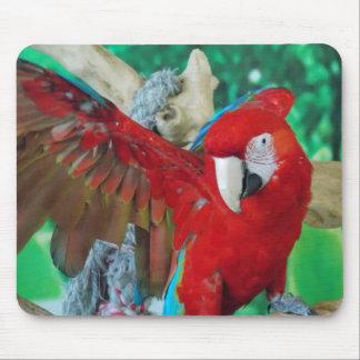 Den scharlakansröda Macawmusen vadderar Musmatta