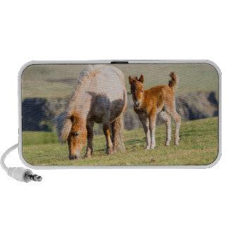 Den Shetland ponnyn betar på nära kickklippor, Laptop Speakers