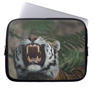 Den Siberian tigern (pantheraen Tigris) gör bar Laptop Sleeve
