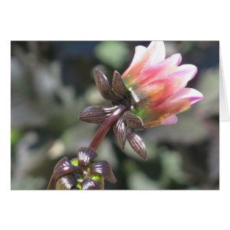 den skimrande blomman är poesi hälsningskort