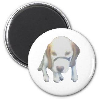 Den slumpmässiga Labrador hunden kopierar Magnet