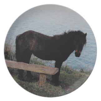 Den södra Devon kustenDartmoor ponnyn nära tar av Tallrik