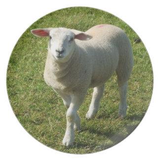 Den södra Devon lamben som tittar mig med, Tallrik
