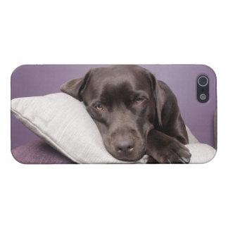Den sömniga hunden för den chokladlabrador iPhone 5 skydd
