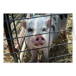 Den söta grisen som är tänkande av dig, Card OBS Kort