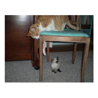 Den stora katten ser lite kattungevykortet vykort