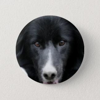 Den svart hunden för gränsCollieansikte knäppas Standard Knapp Rund 5.7 Cm