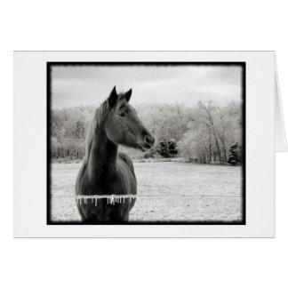 Den svartvita vinterhästen noterar kortet med OBS kort