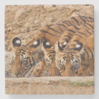 Den Tadoba Andheri tigern reserverar Stenunderlägg