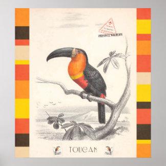 Den Toucan fågelansvariga reser konst Poster